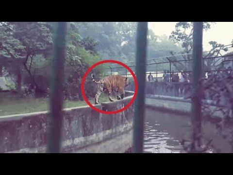 🇧🇩Bangladesh National Zoo Dhaka 2018 . বাংলাদেশ জাতীয় চিড়িয়াখানা ঢাকা । Rizvis Vlogs