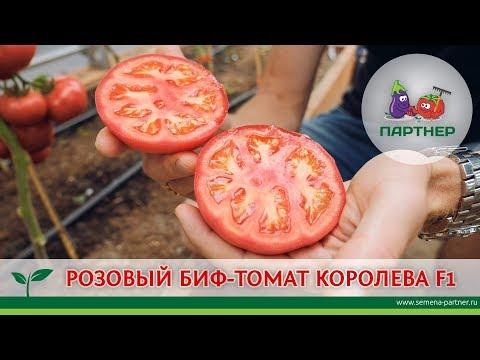 РОЗОВЫЙ БИФ-ТОМАТ КОРОЛЕВА F1 | выращивание | помидоры | королева | томатов | теплица | розовый | помидор | томаты | томата | семена