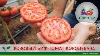 РОЗОВЫЙ БИФ-ТОМАТ КОРОЛЕВА F1