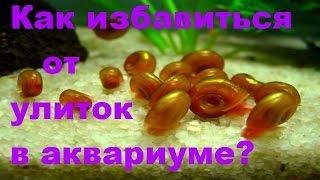 Как избавиться от улиток катушек,меланий в аквариуме [#Улитки в аквариуме]