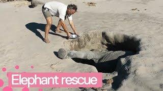 Baby Elephant Rescued from Hole - Amazing Animal Rescue