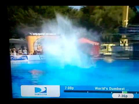 Pool Splash Cannonball best cannonball dive ever! - youtube
