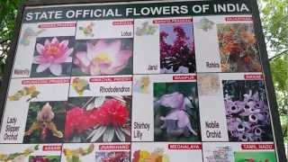 List of Indian State Flowers Video State Official Flowers Of India State Wise