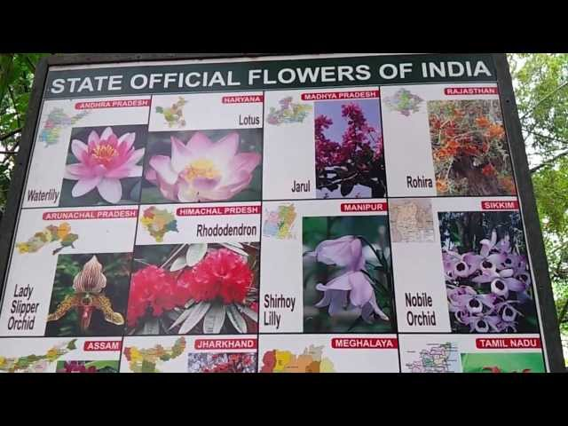 List Of Indian State Flowers Video State Official Flowers Of India State Wise Youtube,Small Bathroom Remodel Floor Plans
