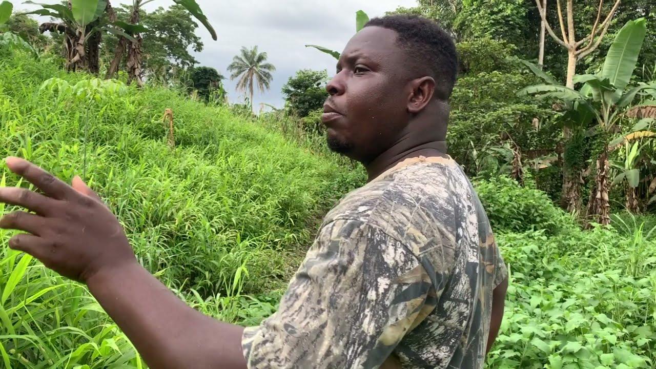 FOCUS ON GINGER FARMING IN GHANA