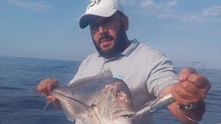 Pêche de DENTIS (dentex) & BARRACUDAS à la traine en Algérie