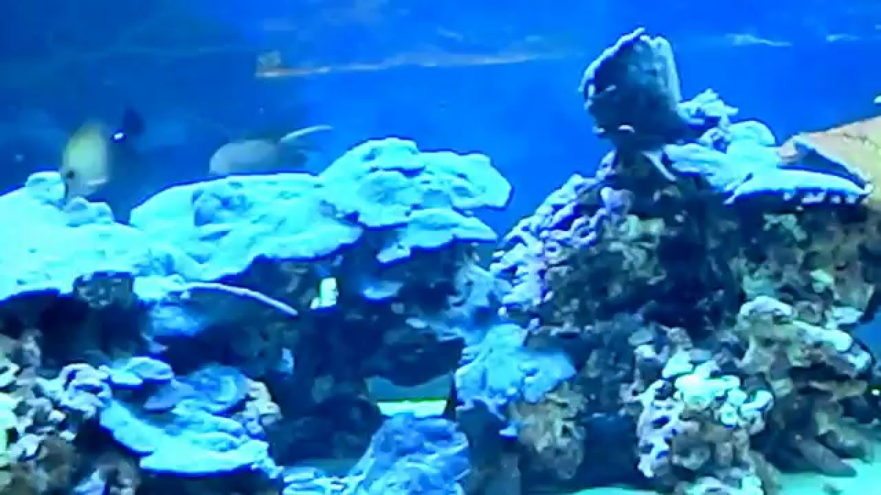 Какие украшения подойдут для аквариума. Коряги, водоросли, фигурки и другой декор. Особенности выбора украшений для разных типов аквариумов. Правила безопасных покупок.