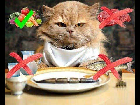 Правильное питание для кота