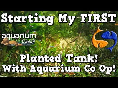 Planting Your First Planted Tank With Aquarium Co-Op! KGTropicals!!