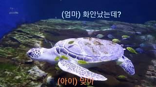 아쿠아리움 바다거북을 보던 모녀의 대화