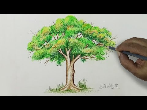 tree---drawing-a-tree-with-simple-colored-pencils-|
