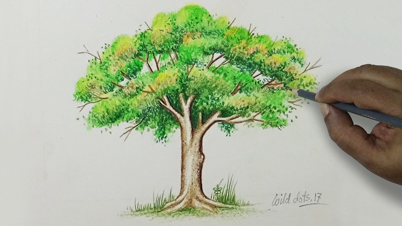Tree   Drawing A Tree With Simple Colored Pencils |