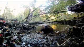 Тайная жизнь бобров Заклинатели бобров   The Beaver Whisperers 2013   Мир Животных   Документальные