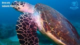 사방포인트ㅣ 필리핀 다이빙의 메카ㅣ 푸에르토 갈레라 [스쿠버다이빙/scubadiving/코브라다이브/사방비치] Sabangpoint