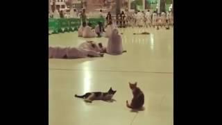 Subhanallah Ketika Kucing Bangunkan Jama'ah Tertidur Saat Adzan Di Masjidil Haram