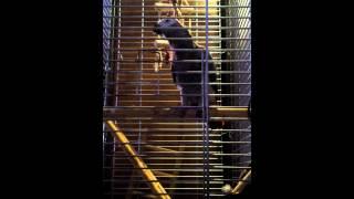 Papuga zako gada kocham Cie i klnie spieprzaj dziadu