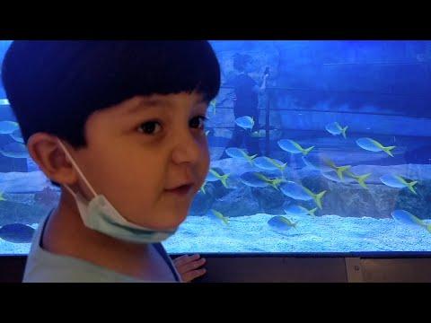 Dubai Aquarium | Small Sharks | Spotted Eagle Ray fish | Kids MZ Show