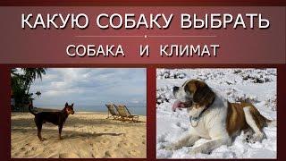 Какую собаку выбрать, ч.5 | Климат и собаки