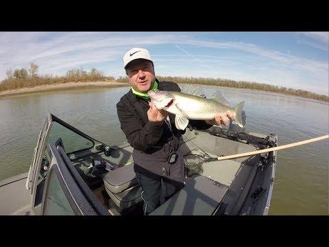 Lower Missouri River Walleye / Missouri USA