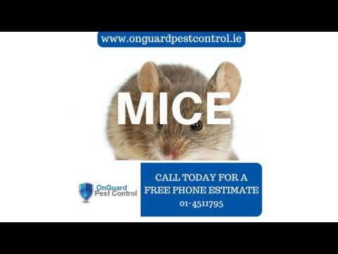 On Guard Pest Control Dublin - Flea & Ant Infestation