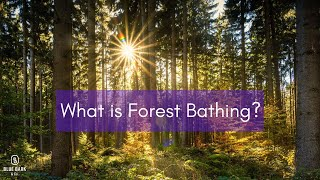 Forest Bathing - What is it? | Nature Sounds | Sound of Water | Meditation | Mindfulness