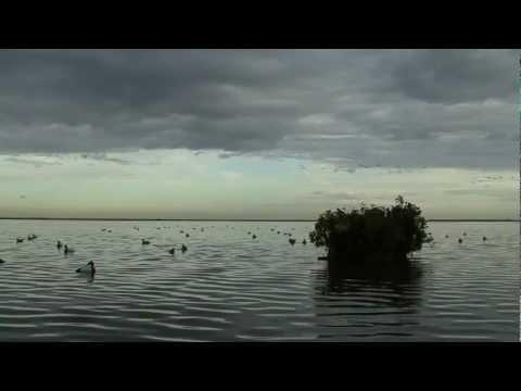 Duck Hunt On The Coast Of Texas