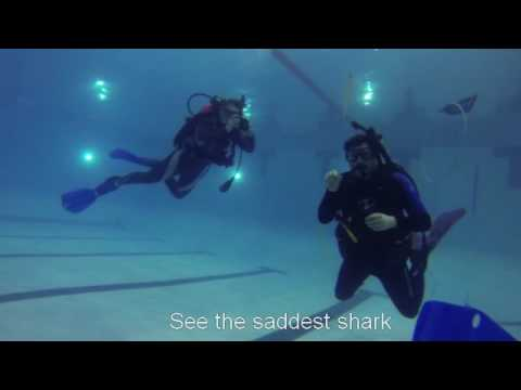 Our videos | Dive Night at Hamme Pool