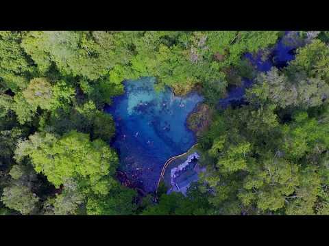 Ichetucknee Springs - Pools in the Forest in 4K
