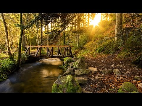 ASMR - 10 Hours Forest Creek Tranqil Sounds for Deep Meditation, Sleeping, Yoga, Massage, Study.