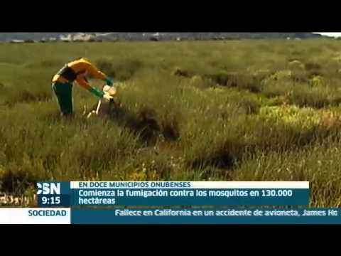 Fumigacion En Huelva Contra Mosquitos