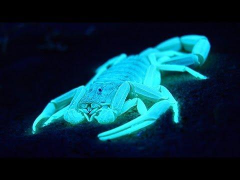 Skull Live Wallpaper 3d Glowing Scorpions Youtube