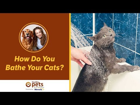 Dr. Becker: How Do You Bathe Your Cats?