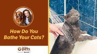 Dr. Becker: How Do You Bathe Your Cats?
