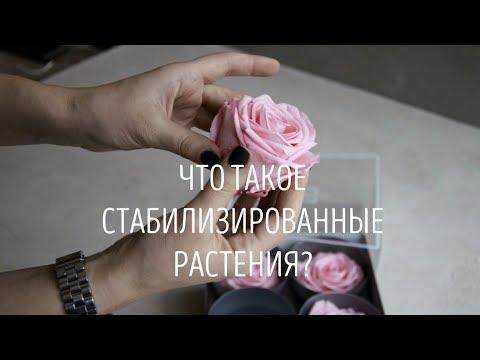 magazin-stabilizirovannih-tsvetov-v-samare-kupit-oformlenie-buketov-dlya-svadebnogo-stola