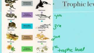 Ecosystem energy flows