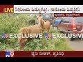 Over 50 Horses Found Abandoned near Bankal Village in Chikmagalur