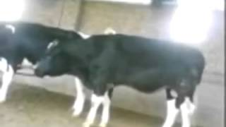 سكس حيوانات مضحك