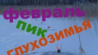 видео Рыбалка в феврале. Лекшмозеро.