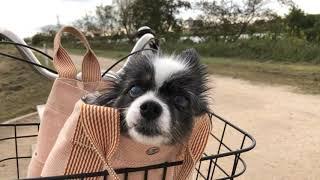 新しい飼い主は 毎日自転車お散歩に連れて行ってくれるの。 楽しいですよ。