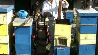 Отстраняване на пчелите от питите