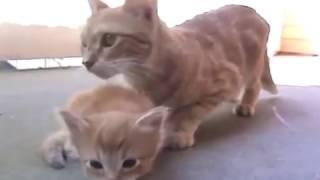 Mother Cat SAVES her KITTEN! [Hero]
