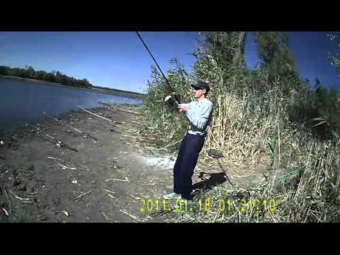 ловля сазана в прудах ростовской области