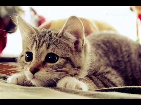 картинки котики красивые