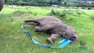 Elephant play Hula Hoop