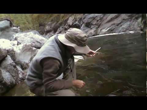 South Fork Stillaguamish River Fishing, Fly Fishing