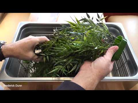 How To Clean Plastic Aquarium Plants And Ornaments Without Scrubbing
