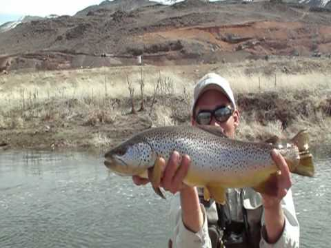 Fly fishing the truckee river arlo 39 s fly fishing for Fly fishing nevada