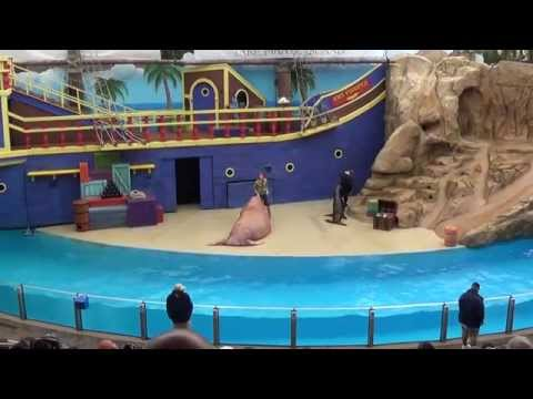 SeaWorld Orlando - Clyde and Seamore Take Pirate Island - Co