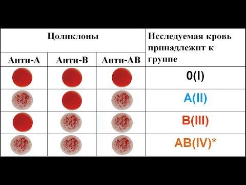 Определение группы крови и резус принадлежности цоликлонами
