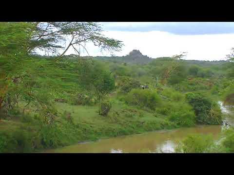 African River Wildlife Cam 03-15-2018 01:36:31 - 02:16:00